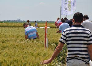 Dan polja pšenice i ječma